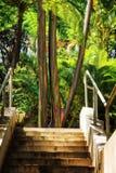 Écorce d'arbre colorée de l'arbre d'eucalyptus d'arc-en-ciel à Puerto Rico photographie stock libre de droits