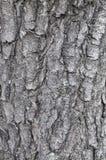 Écorce d'arbre d'un fond de texture de châtaigne Photos libres de droits