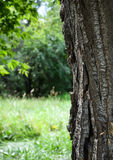 Écorce d'arbre dans la forêt image stock