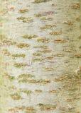 Écorce d'arbre dans le jardin, texture, botanique, Image libre de droits
