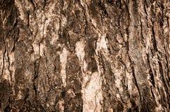 Écorce d'arbre de Brown Image stock