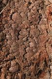 Écorce d'arbre de Brown avec l'herbe sèche Images libres de droits