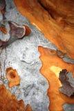 Écorce d'arbre de gomme Photos libres de droits