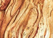 Écorce d'arbre de Swirly photographie stock libre de droits