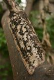 Écorce d'arbre endommagée ou malade Photos stock