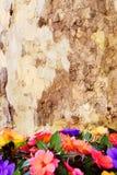 Écorce d'arbre et de fleurs Photographie stock
