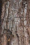 Écorce d'arbre, parties sèches de l'arbre photo stock