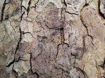 Écorce d'arbre plat Photographie stock libre de droits