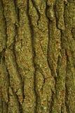 Écorce d'arbre, région rose de bâtis, Pisgah N-F image libre de droits