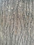 Écorce d'arbre rugueuse photos stock