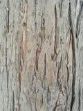 Écorce d'arbre rugueuse photographie stock libre de droits