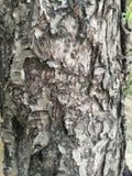 Écorce d'arbre rugueuse photo libre de droits