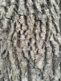 Écorce d'arbre rugueuse images libres de droits