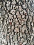 Écorce d'arbre rugueuse avec les modèles carrés de forme photos libres de droits