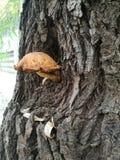 Écorce d'arbre rugueuse avec un champignon photographie stock