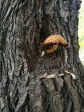 Écorce d'arbre rugueuse avec un champignon photos libres de droits
