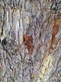 Écorce d'arbre, sèche photos stock