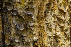 Écorce d'arbre sur la barrière Photos stock