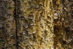 Écorce d'arbre sur la barrière Images libres de droits