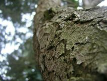 Écorce d'arbre sur le tronc photo stock