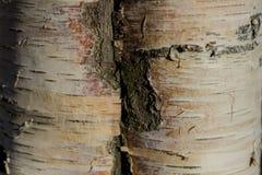 Écorce d'arbre sur un fond fortement brouillé images stock