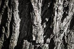 Écorce d'arbre, texture photographie stock