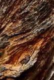 Écorce d'arbre texturisée rugueuse photo libre de droits