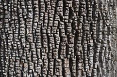 Écorce d'Ash Tree vert Photos stock