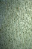 Écorce d'eucalyptus Images stock