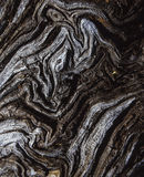 Écorce d'un arbre Photographie stock libre de droits