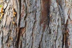 Écorce d'un arbre image libre de droits