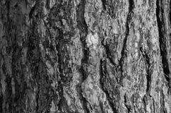 Écorce d'un arbre en noir et blanc Image stock