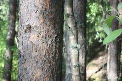 Écorce d'un arbre en parc images stock