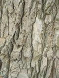 Écorce d'un vieil arbre Photographie stock libre de droits