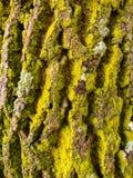 Écorce d'un vieil arbre Image stock