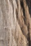 Écorce de bois comme fond Photo stock
