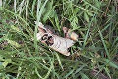 Écorce de bouleau dans l'herbe Photo stock