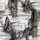 Écorce de bouleau sans couture Texture, fond images libres de droits