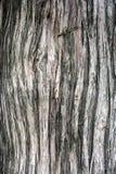 Écorce de cèdre Photo libre de droits