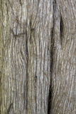 Écorce de chêne Photos stock