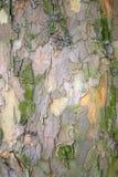 Écorce de joncteur réseau d'arbre Images libres de droits