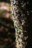 Écorce de l'arbre Image libre de droits