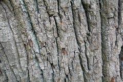 Écorce de l'arbre Photographie stock libre de droits