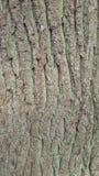 Écorce de l'arbre 02 Images stock