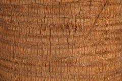 Écorce de palmier Photo stock