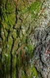 Écorce de pin de texture Photographie stock libre de droits