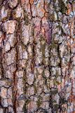 Écorce de pommier Photos stock