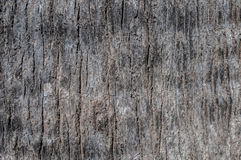 Écorce de texture d'arbre Photos libres de droits