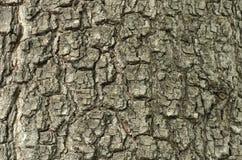 Écorce de texture sans joint de Tileable de vieux chêne Photo libre de droits