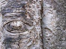 Écorce de tronc d'arbre de forme d'oeil Photo stock